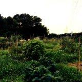 コトモファームの自然菜園
